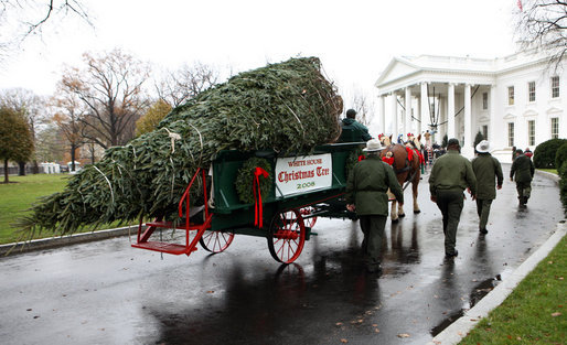 christmas tree at the White House from Ashe County